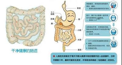 你的肠道健康吗?肠道排毒一身轻,科学瘦身