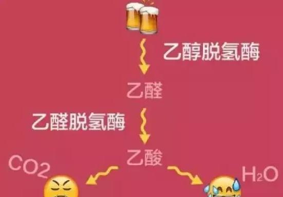 酒精会损伤干细胞,喝酒伤身!不要喝酒了!