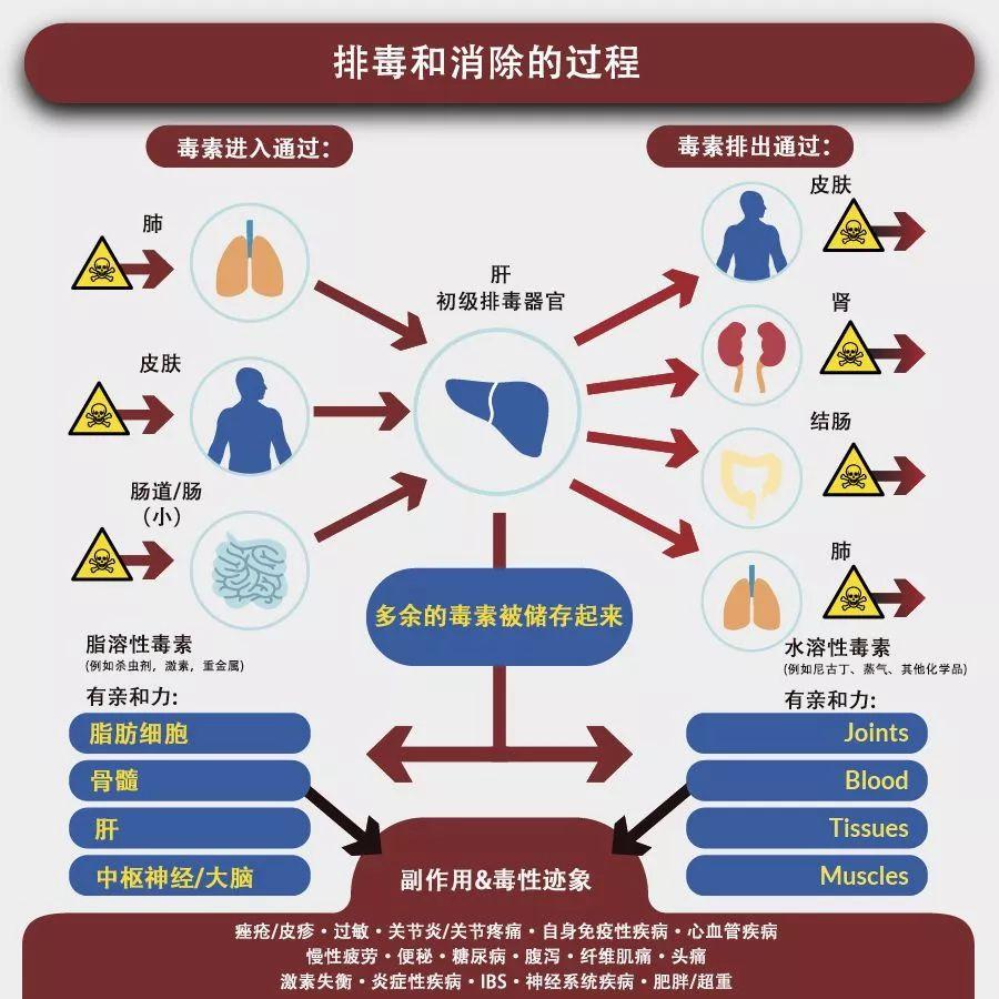 染发可能导致不孕不育等各种疾病,损害肝脏