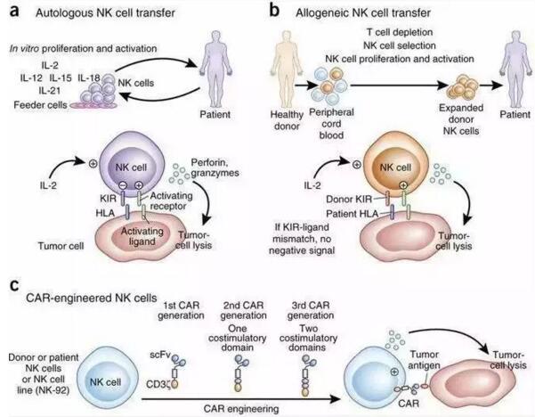 免疫细胞治疗的作用怎么样?NK细胞抵抗肿瘤