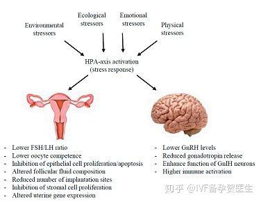 压力是如何影响生育能力和胎儿?评估皮质醇水